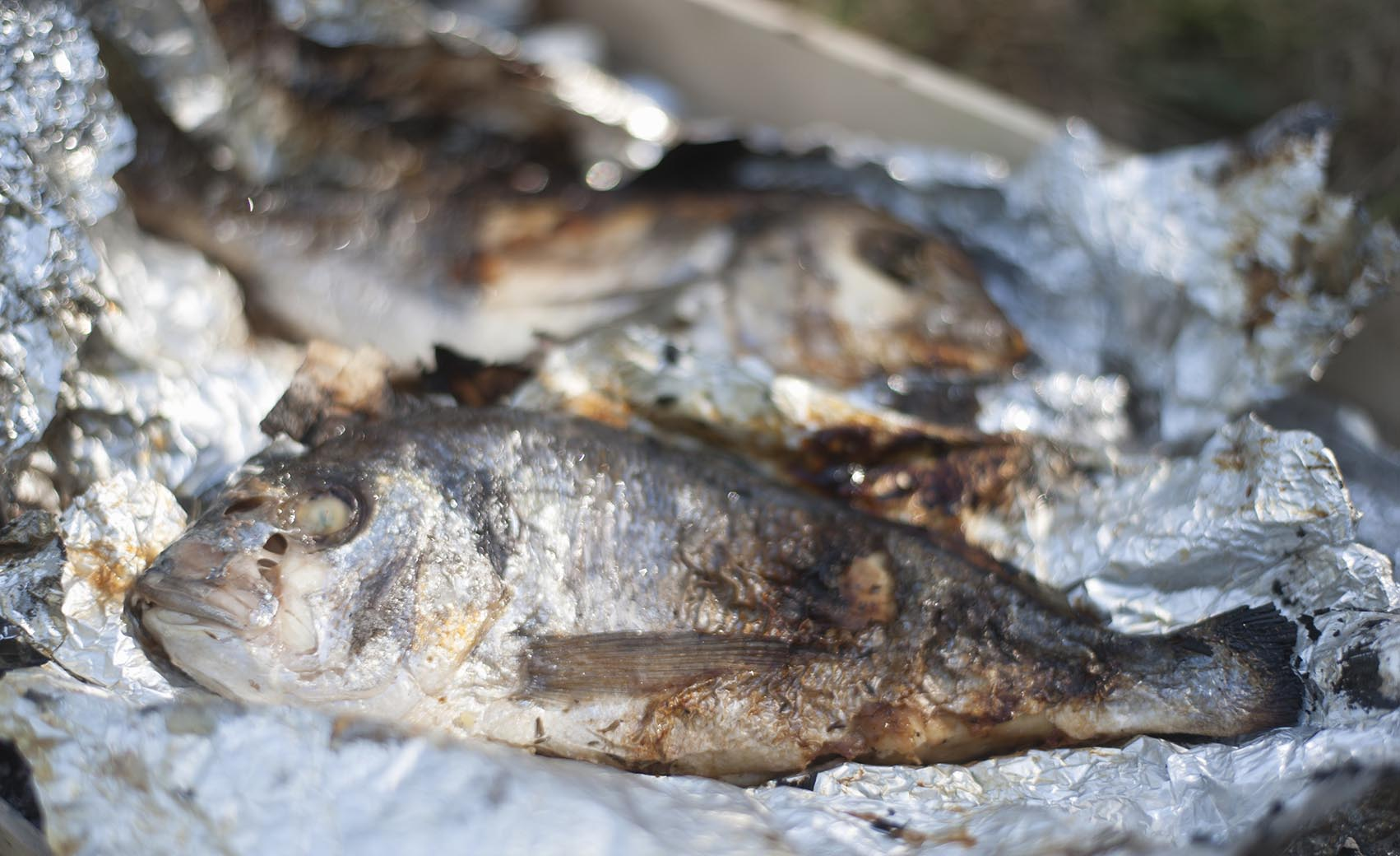 Cinquantacinque ricette di cucina dei pesci d'acqua